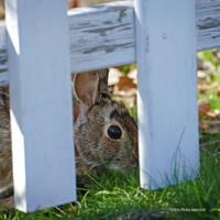 Rabbit eye by Mogrianne