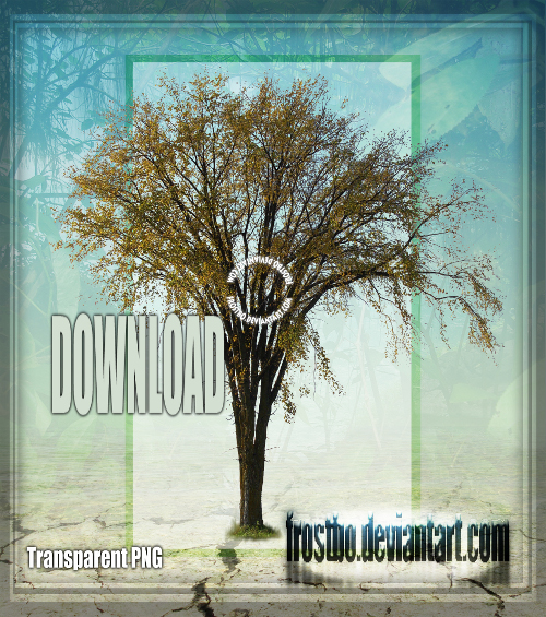 Tree 01 Stock