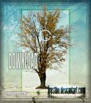 Tree 03 Stock