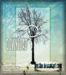 Tree 05 Stock