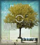 Tree 06 Stock