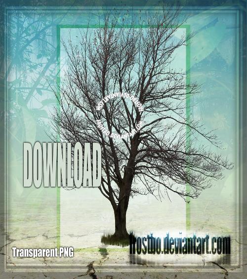 Tree 07 Stock