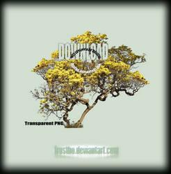 Tree 39 Stock