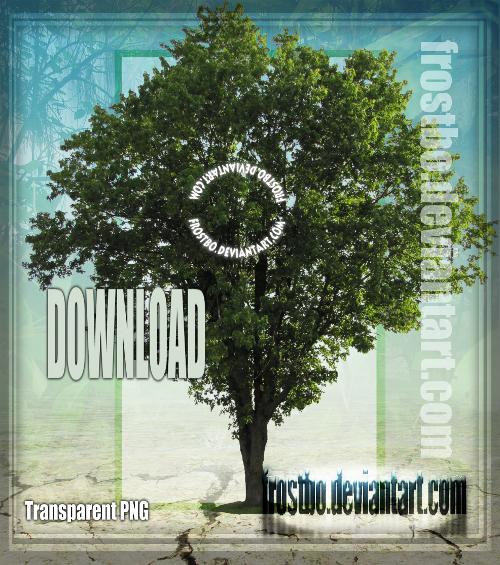Tree 37 Stock