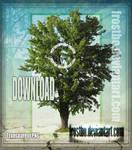 Tree Stock 40