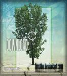 Tree Stock 45
