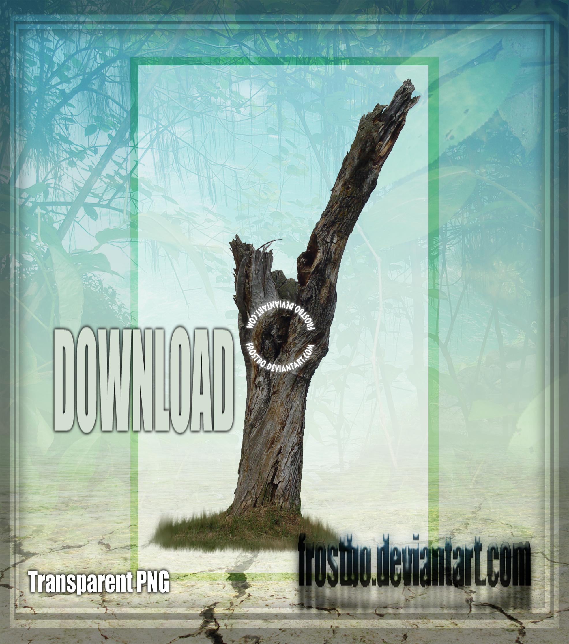 Tree Stock 46