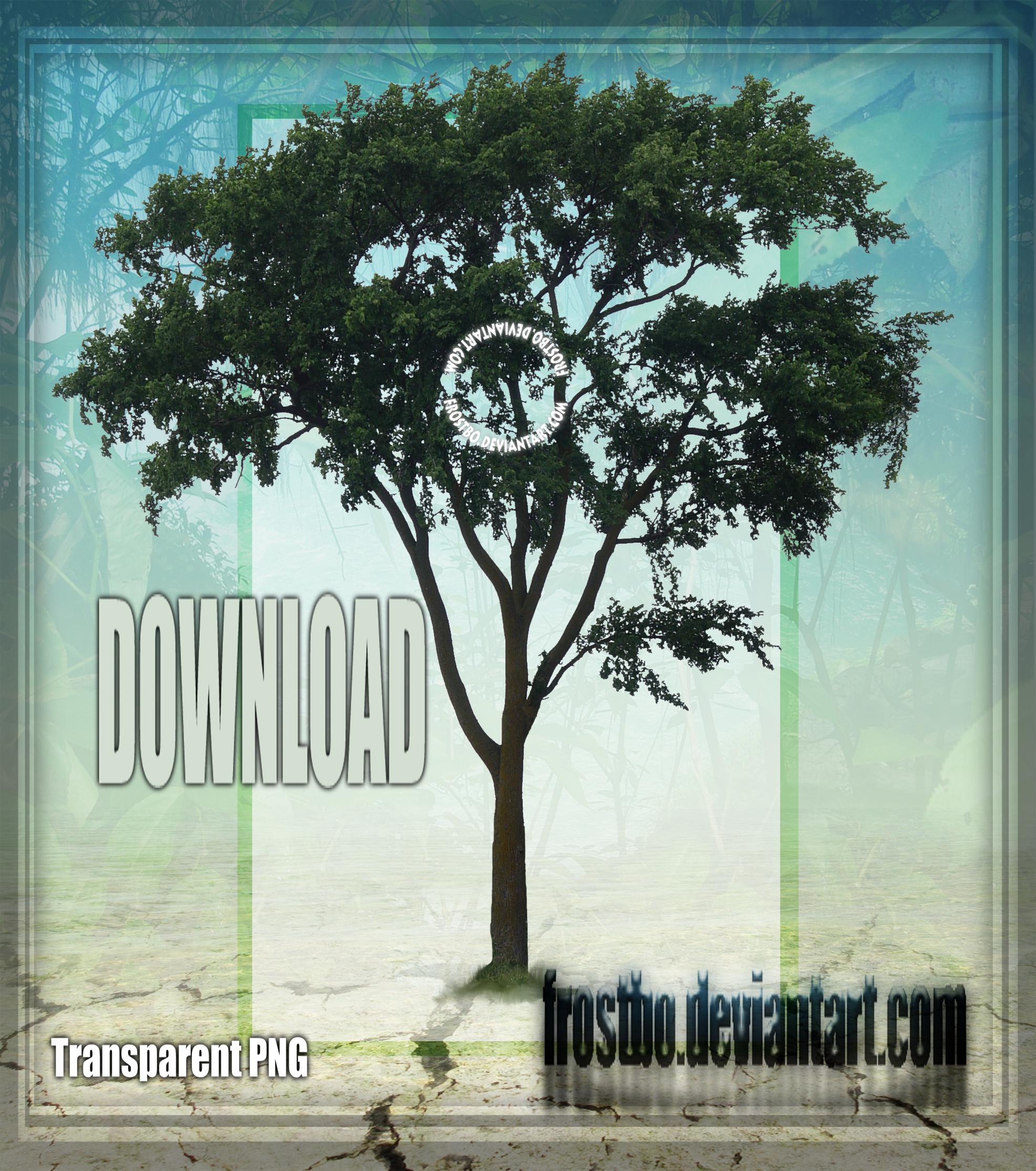 Tree Stock 47