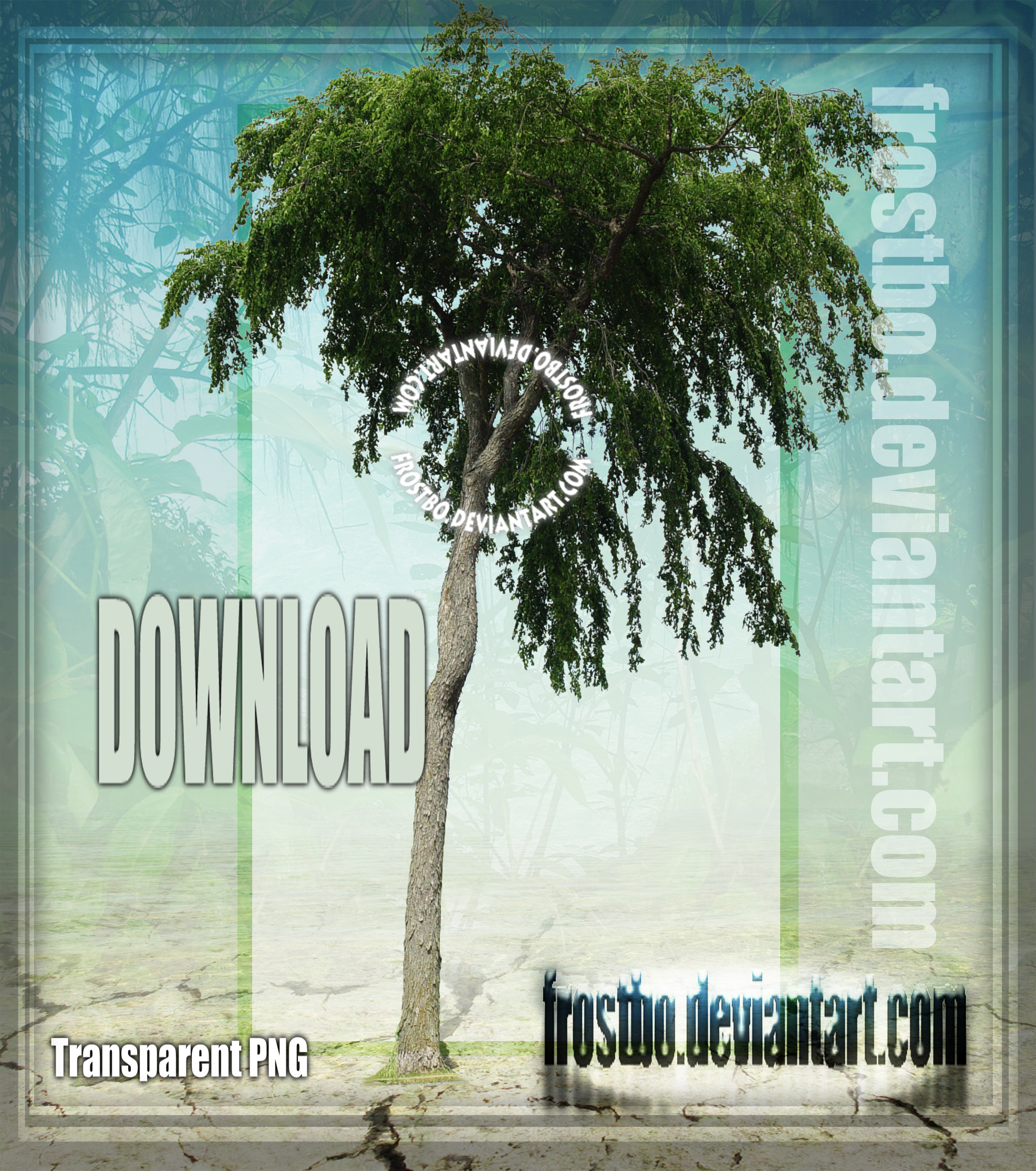 Tree Stock 48