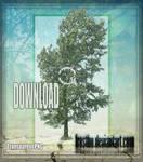 Tree Stock 50