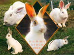 Bunny Stock Pack FREE