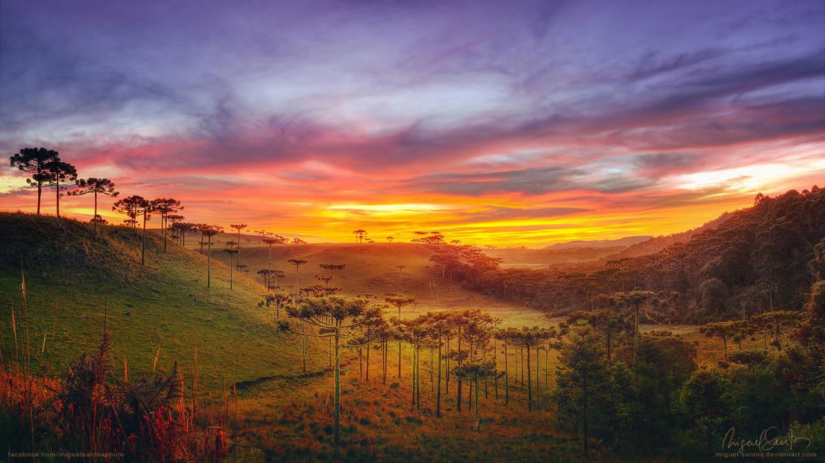 Araucaria Valley by Miguel-Santos