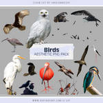 Birds Aesthetic PNG Pack