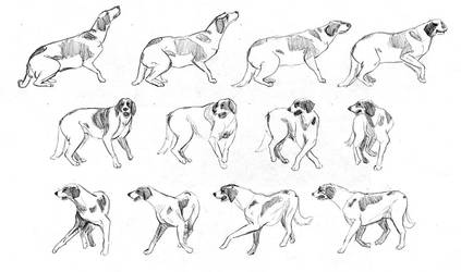[animated] Dog turn study