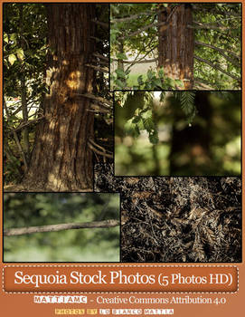 SEQUOIA Stock 5 Photos Sempervirens Coast redwood