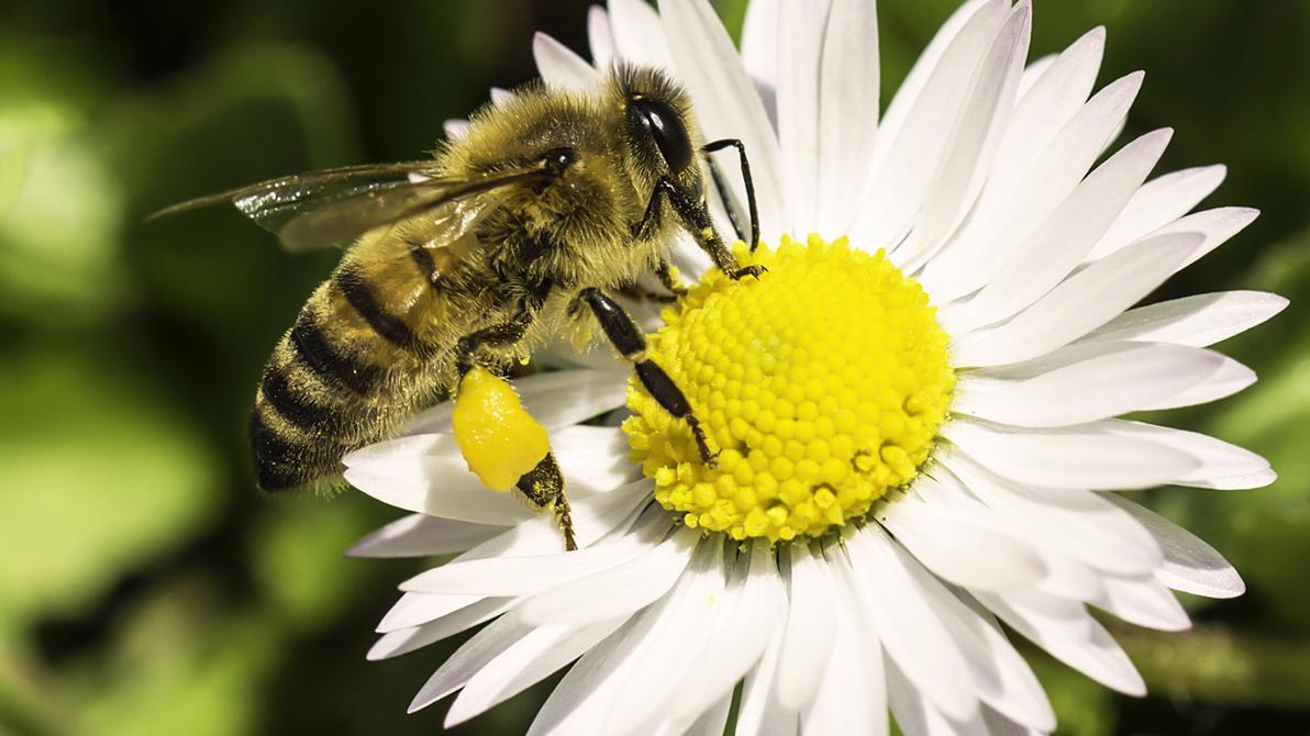 Wallpaper Happy Spring! Bee Ape by MattiaMc by MattiaMc