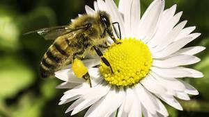 Wallpaper Happy Spring! Bee Ape by MattiaMc