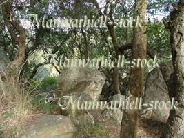 Trees_Rock  Exclusive