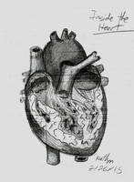 The Inside of the Human Heart by FunStorytimeStudios