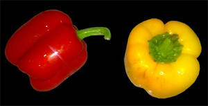 Capsicums stock 2 PNG