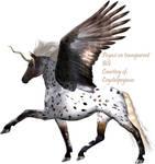Pegasus Resource