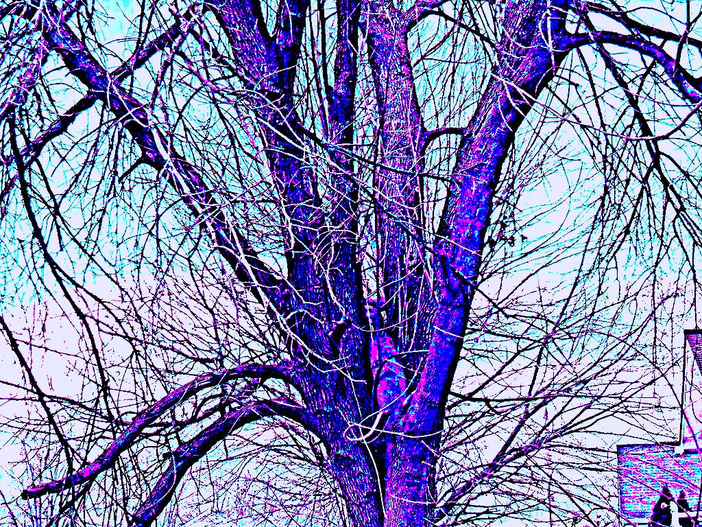 the tree of woe by birain2020