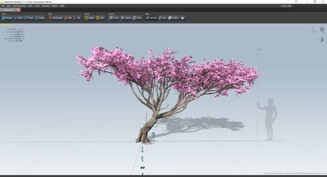 Cherry Blossom [Video] by LCzin