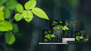 Greenish wallpaper