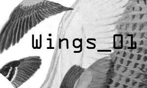 wings_01 brushes by rykan4marius