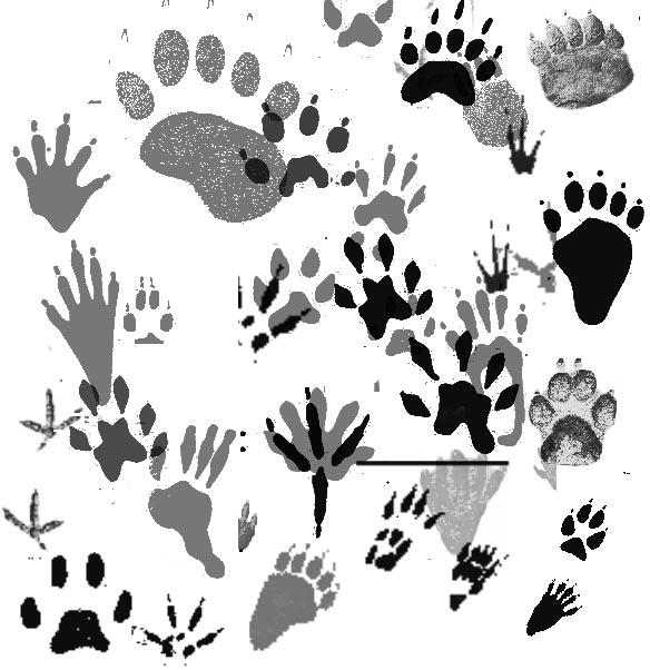Animal Tracks Brushes By Memories Stock