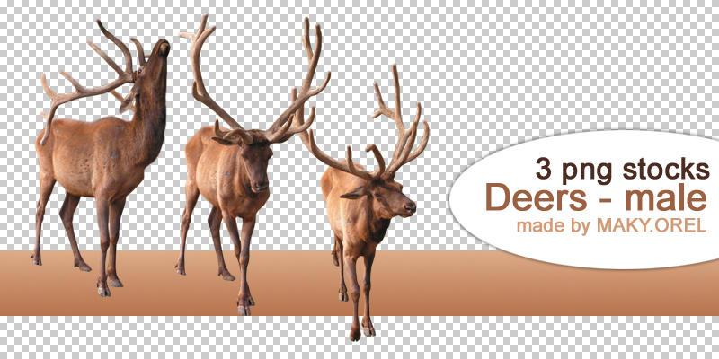 PNG STOCK SET: Deer by MAKY-OREL