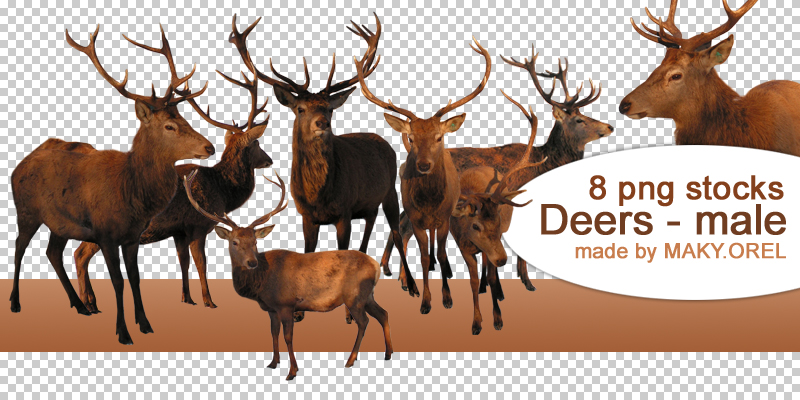 PNG STOCK SET: Deer 2