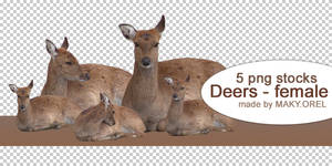 PNG STOCK SET: Deer - female (Doe)