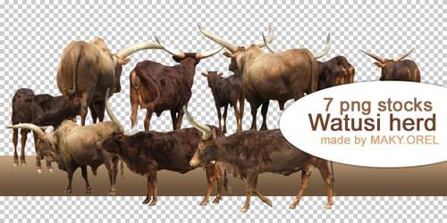 PNG STOCK SET: Watusi herd