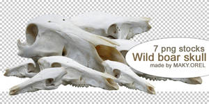 PNG STOCK SET: Wild boar skull