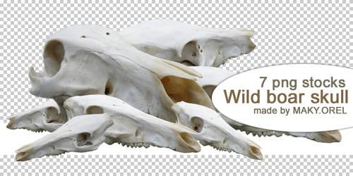 PNG STOCK SET: Wild boar skull