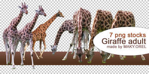 PNG STOCK SET: Giraffe