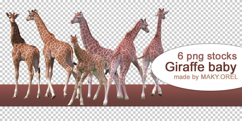 PNG STOCK SET: Giraffe - baby by MAKY-OREL