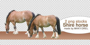 PNG STOCK SET: Shire horse