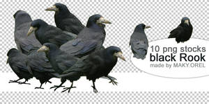 PNG STOCK SET: Black rook