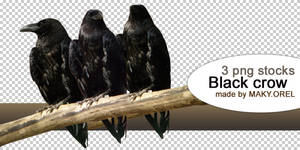 PNG STOCK SET: Black crow