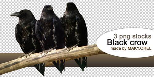 PNG STOCK SET: Black crow