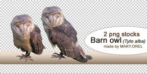 PNG STOCK SET: Barn owl by MAKY-OREL