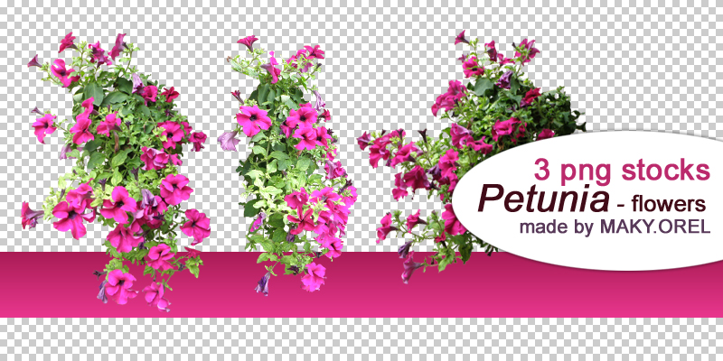 PNG STOCK SET Petunia Flower 1 By MAKY OREL