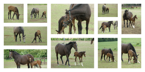 Mare And Foal Stock