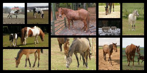 Random Horses Stock