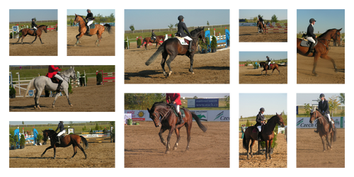 Show Jumping Stock
