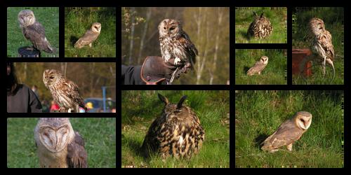 Owls Stock