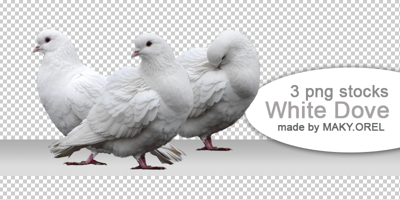 PNG (pre-cut) STOCK: White dove