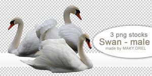PNG (pre-cut) STOCK: Swan - male